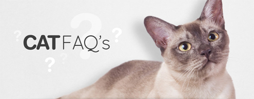 Frequently Asked Questions Cats