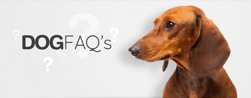 Frequently Asked Questions Dogs