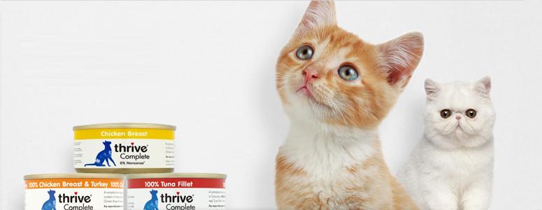 Cat Wet Food Banner
